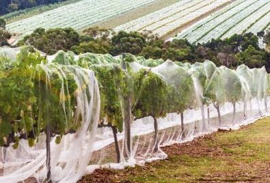 Application de filet de jardin